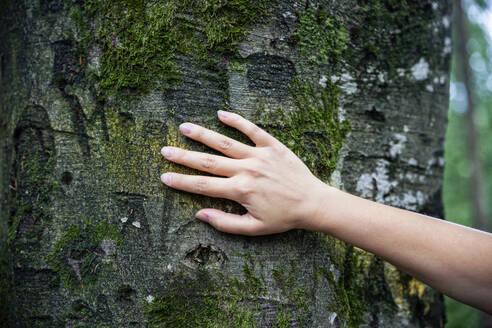 Female hand touching a tree - MAMF00950