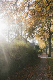 Residential area in autumn, Berlin, Germany - AHSF01067