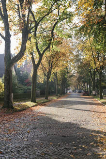 Residential area in autumn, Berlin, Germany - AHSF01103