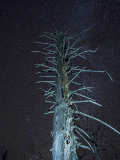 Germany, Bavaria, Low angle view of dead tree against starry night sky - HUSF00108