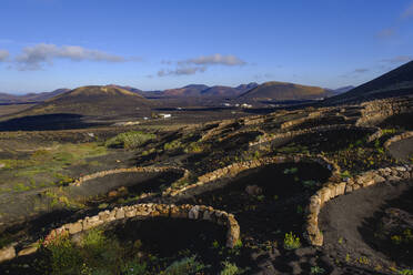 trichterförmige Weinkulturen, bei Yaiza, Weinanbaugebiet La Geria, Lanzarote, Kanaren, Spanien - SIEF09297