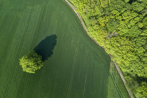 Germany, Bavaria, Aerial view of country road stretching along edge of green countryside field - RUEF02362