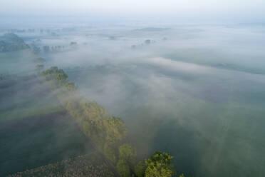 Germany, Bavaria, Aerial view of morning fog shrouding row of countryside trees - RUEF02368
