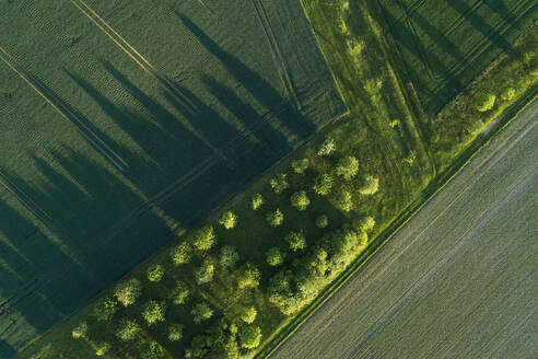 Germany, Bavaria, Aerial view of green countryside fields in spring - RUEF02377