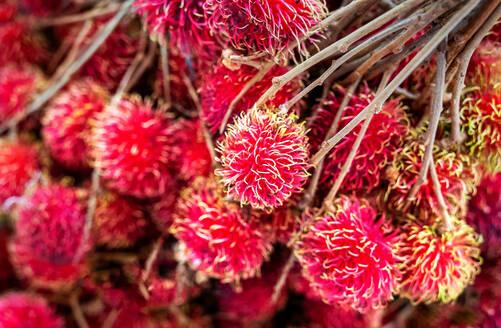 Fresh rambutan fruit sold at market in Togian Islands, Indonesia, Southeast Asia, Asia - RHPLF12800