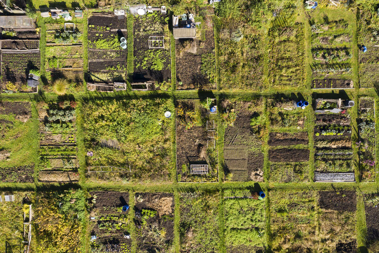 Germany, Bavaria, Geretsried, Aerial view of rows of community gardens - LHF00759 - Hans Lippert/Westend61