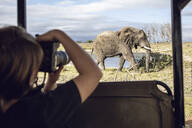 Back view of girl taking photo of an elephant, Inverdoorn game Reserve, Breede River DC, South Africa - MCF00326