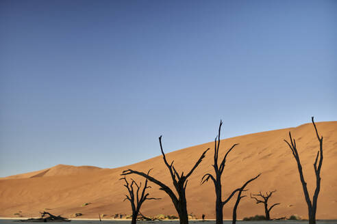 Dead trees in Deadvlei at sunrise, Sossusvlei, Namib desert, Namibia - VEGF00920
