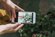Close-up of woman taking smartphone picture of plants - VPIF01866