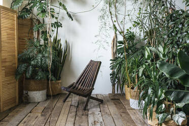 Wooden chair and plants in winter garden - VPIF01896