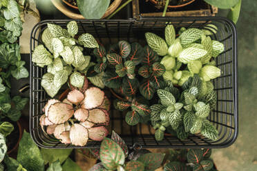 Potted plants in a shopping basket - VPIF01899