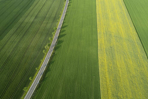 Germany, Bavaria, Aerial view of treelined road stretching between vast countryside fields - RUEF02396