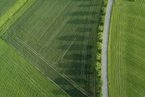 Germany, Bavaria, Aerial view oftreelinedroad stretching between vast countryside fields - RUEF02399