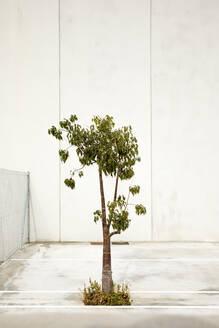 Single tree on an industrial site - JMF00459