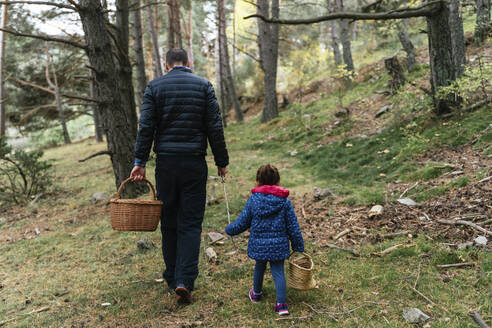 Father and daughter walking in the woods with stick and basket looking for mushrooms - GEMF03317