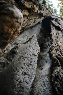Low angle view of cracked tree trunk - CAVF70019