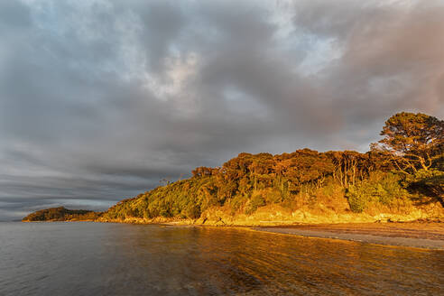 New Zealand, Tasman District, Puponga, Forested coastline of Golden Bay at cloudy dawn - FOF11391