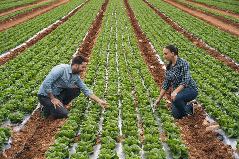 Almeria, Spain. Technician and grower in an outdoor lettuce field. Woman and man supervising the lettuce field. - MPPF00384