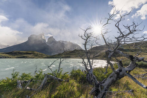 Dead trees with Lake Nordenskjold and Paine Horns in the background in autumn, Torres del Paine National Park, Chile, South America - RHPLF13139