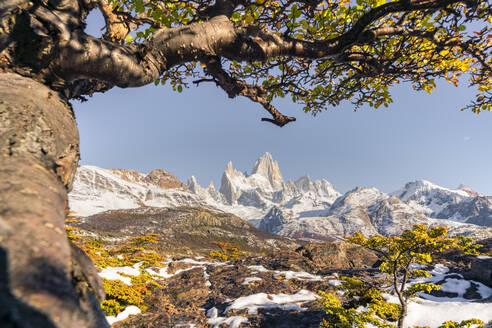 Fitz Roy range peaks with tree in autumnal landscape, El Chalten, Los Glaciares National Park, UNESCO World Heritage Site, Santa Cruz province, Argentina, South America - RHPLF13142