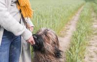 Woman feeding dog at a field - BFRF02149