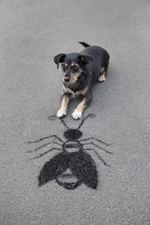 Portrait of mongrel lying on asphalt in front of drawn oversized insect - PSTF00584