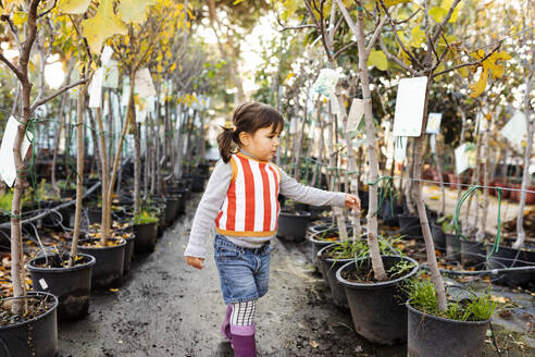 Little girl exploring potted trees in plant nursery - VABF02472