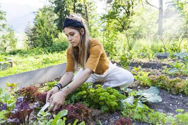 Woman gardening - TCF06235