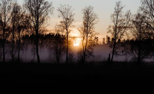 Forest and meadow covered in fog and frost at sunset - CAVF71957