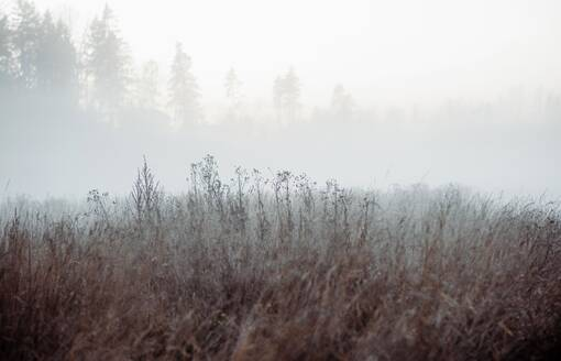 Trees and plants covered in fog in a meadow in the countryside - CAVF71963