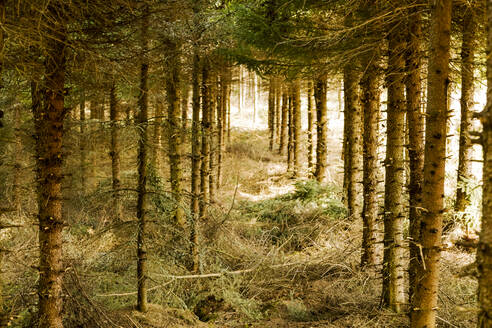 Trees in forest - JOHF05043