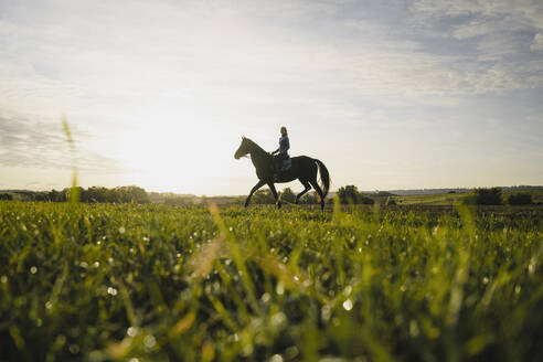 Woman riding horse on a field in the countryside at sunset - JOSF04122