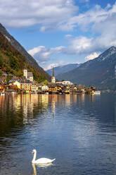 Austria,Upper Austria, Hallstatt, Swan swimming inLake Hallstatt with coastal town in background - PUF01750