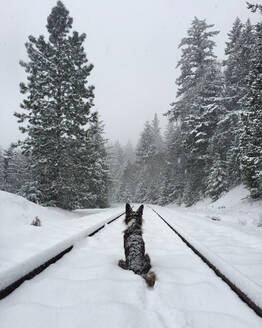 Rear view of dog sitting on snow covered railroad track - CAVF72509