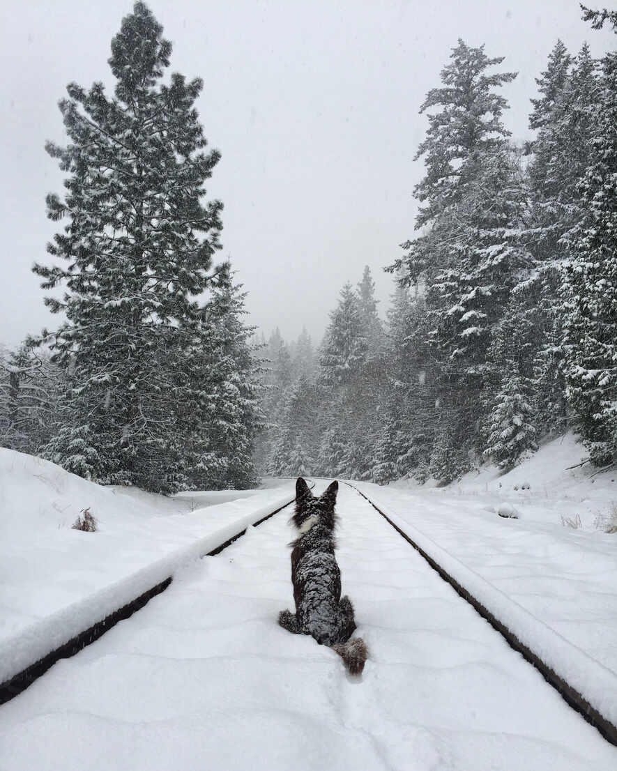 Rear view of dog sitting on snow covered railroad track - CAVF72509 - Cavan Images/Westend61