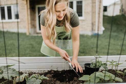 Woman growing plants in trough in garden - ISF23652