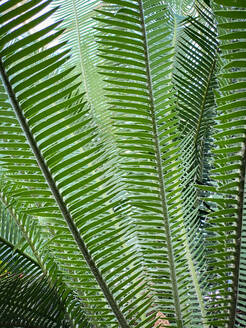 Green tropical plants in jungle garden close up of leaves - CAVF73526