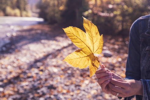 Woman with yellow autumn leaf - DHEF00024