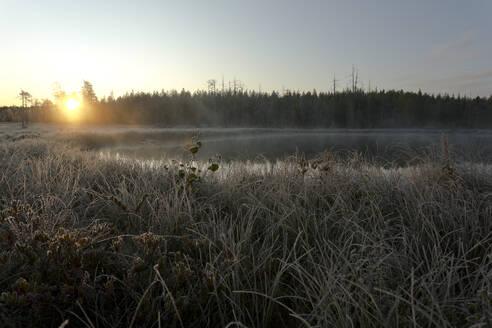 Sonnenaufgang in der herbstlichen finnischen Taiga, Kuhmo, Finnland - ZCF00900