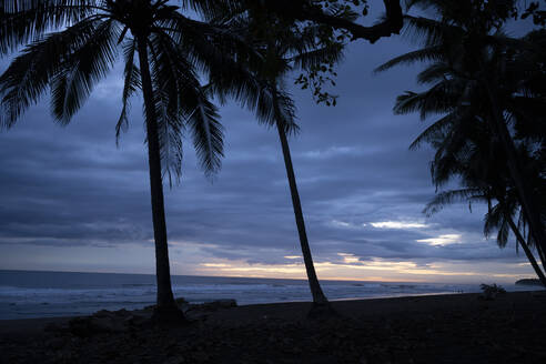 Costa Rica, Guanacaste Province, Silhouettes of palm trees growing on coastal beach at dusk - TEBF00022