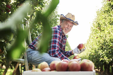Fruit grower sitting in ladder, holding apple in his orchard - ABIF01265