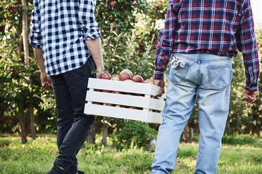 Fruit growers carrying full apple crate, rear view - ABIF01271