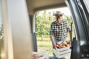 Fruit grower loading car with apple crates - ABIF01277