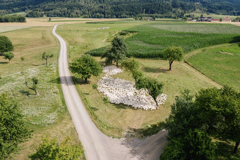 Austria, Carinthia, Klagenfurt, Aerial view of large flock of geese grazing by countryside dirt road - DAWF01192