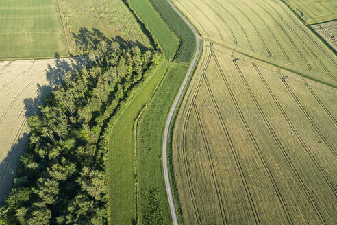 Germany, Bavaria, Franconia, Aerial view of green fields and dirt road - RUEF02593
