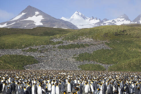 High angle view of colony of king penguins against mountains - CAVF73632