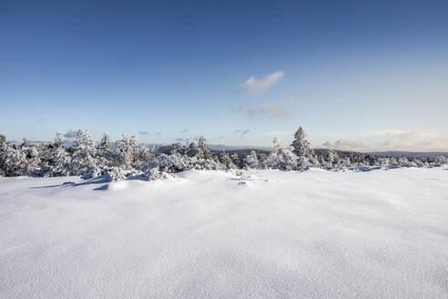 Winter landscape at Hornisgrinde, Black Forest, Germany - MSUF00152