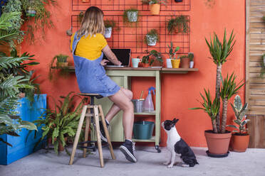 Woman with dog using laptop on her terrace - RTBF01406