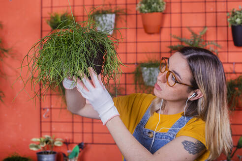 Woman examining Rhipsalis plant on her terrace - RTBF01412