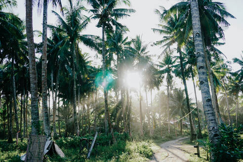 Palm trees at sunset, Siargao Island, Philippines - FAF00086